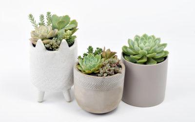 Succulent Dos & Don'ts