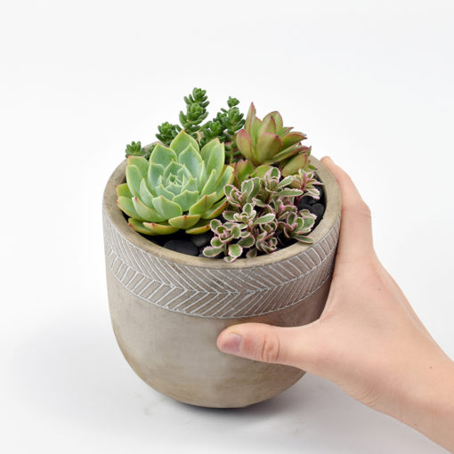 Succulents in concrete pot