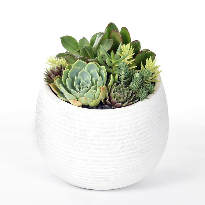 Succulents in a white ceramic bowl