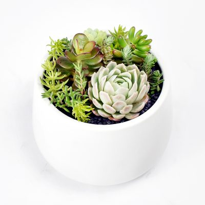 Succulents in white ceramic rounded pot