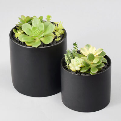 Succulents in matte black pots