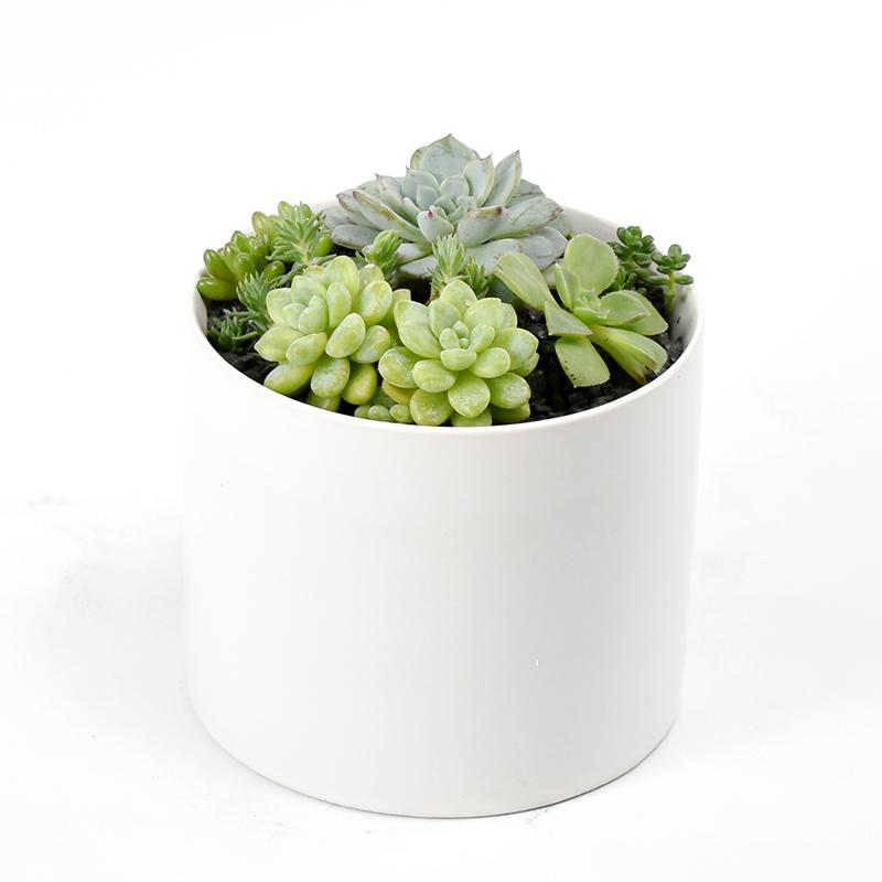 Petite Succulent Garden Plant Gift