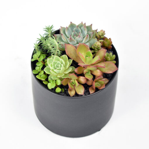 Petite Succulent Garden in Matte Black pot