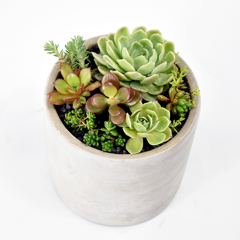 Succulent Garden in Concrete Pot