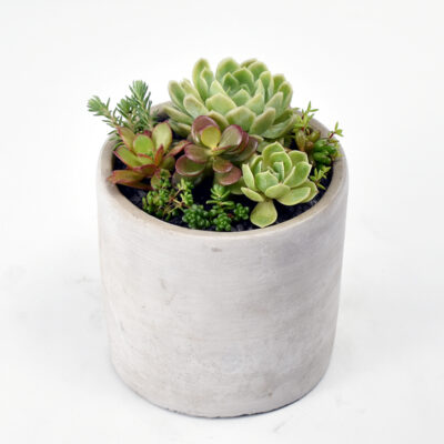 Succulent Garden in Concrete Pot