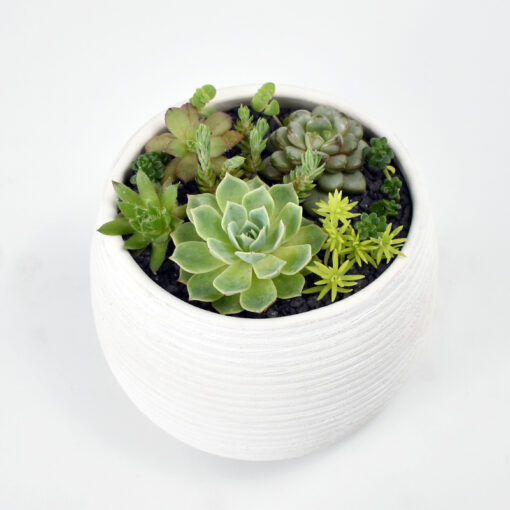 Succulent Bowl and soy candle melbourne