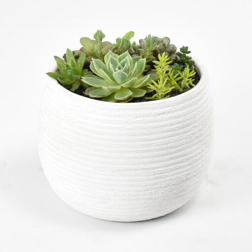 Succulent Bowl and soy candle
