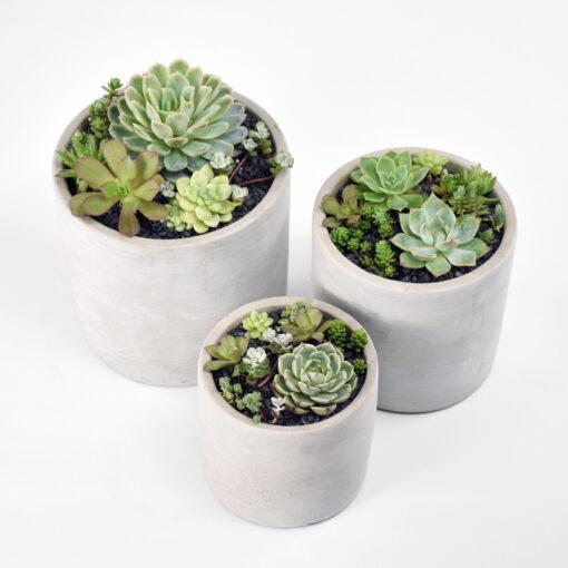 succulent plant garden in concrete pot