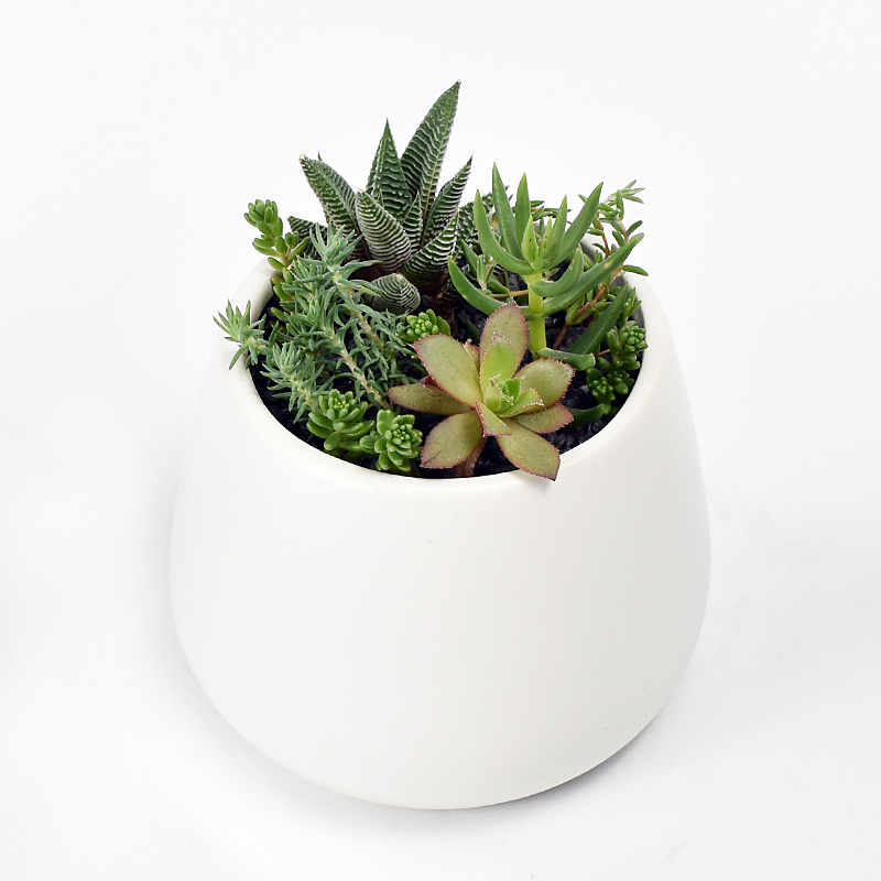 Succulent Belly Pot