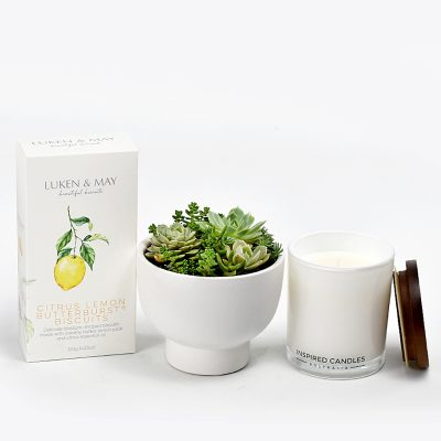Succulents in white ceramic bowl with lemon biscuits and luxury soy candle