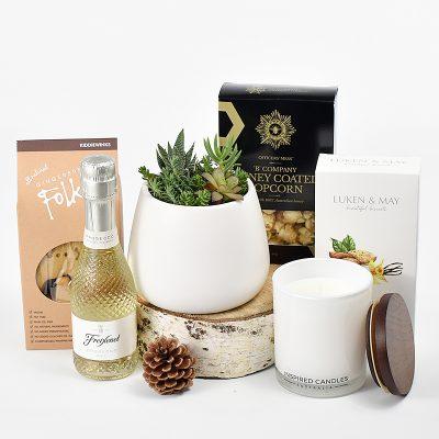 Succulent plant and Gift Hamper