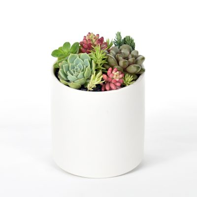 petite succulent garden in white ceramic cylinder pot