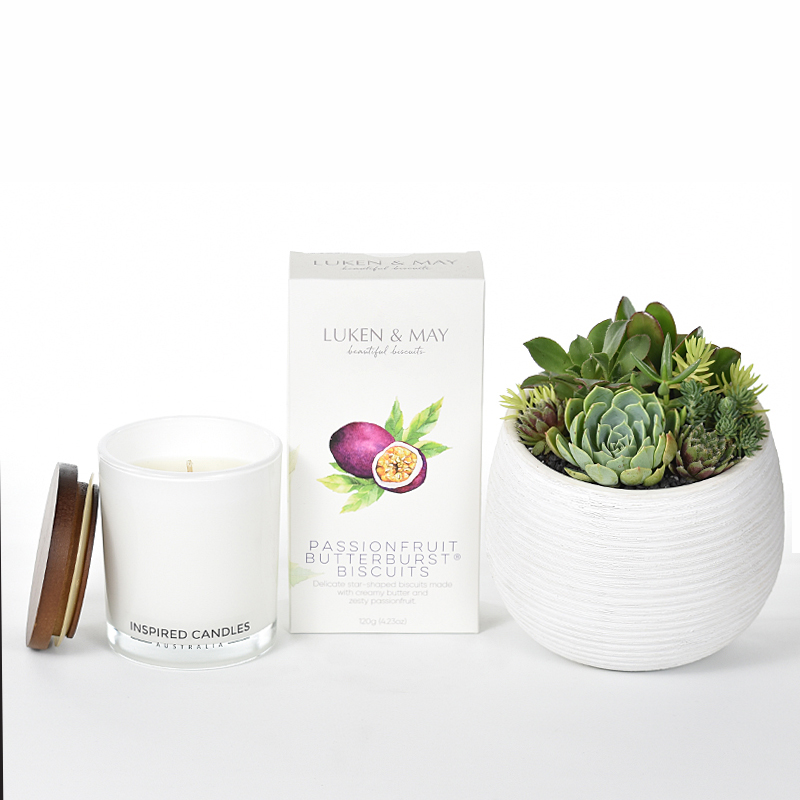 Succulents in white ceramic bowl with a luxury soy candle and Luken ad May Biscuits