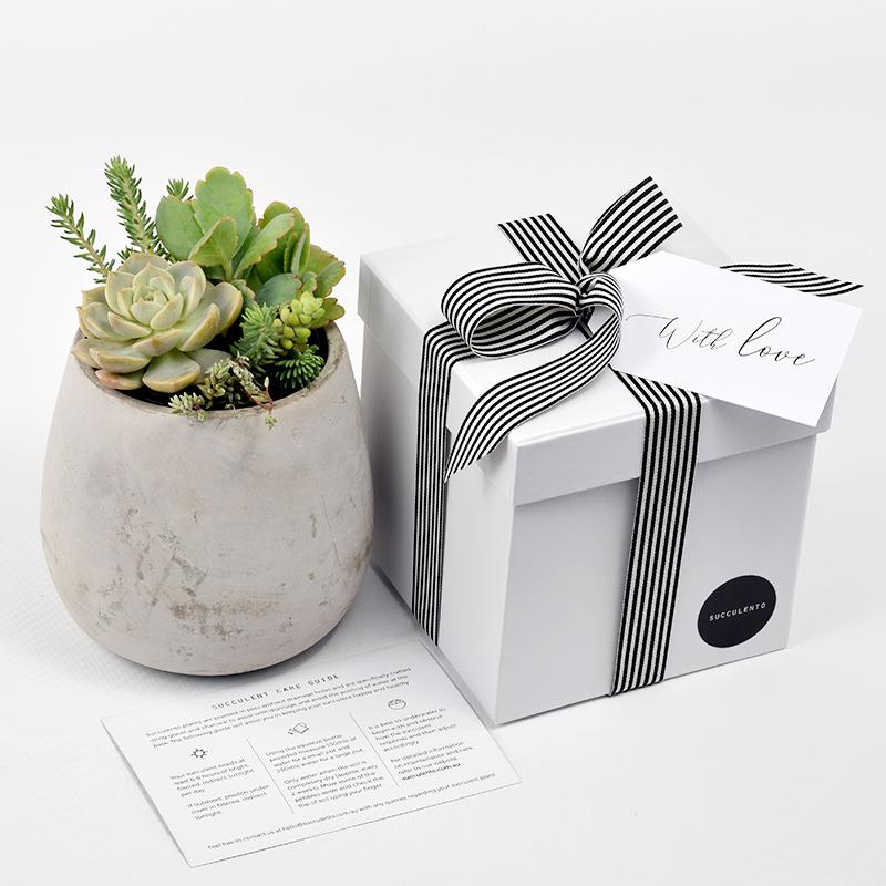 Succulent Plant Arrangement in Concrete Tulip Shaped Pot Gift