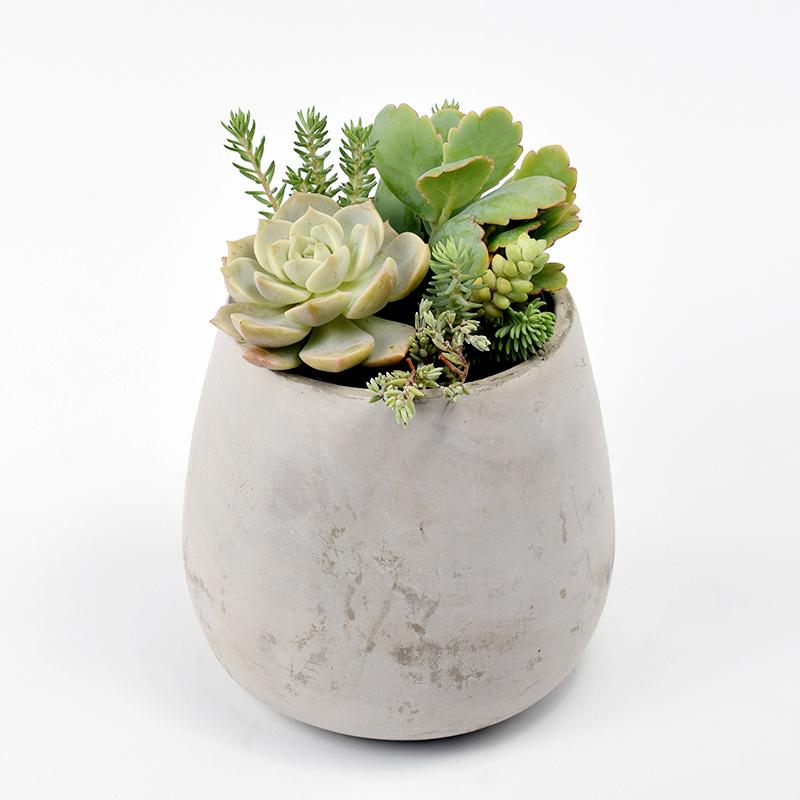Succulent Plant Arrangement in Concrete Tulip Shaped Pot