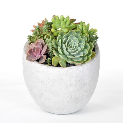 Succulents in a concrete bowl