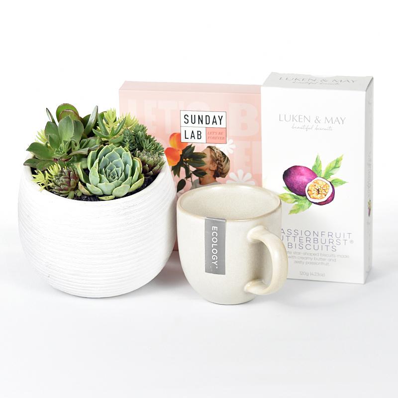Succulents, tea and biscuits hamper