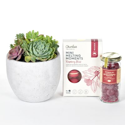 Succulents in concrete bowl with biscuits and raspberry drops
