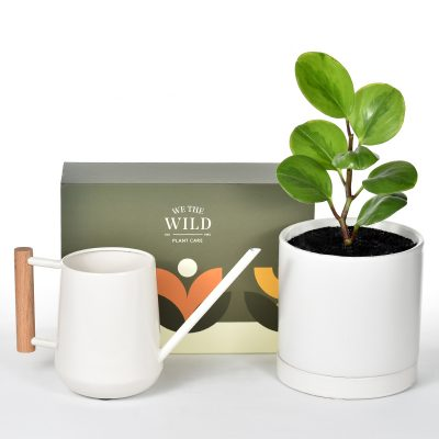 Indoor plant in ceramic pot with sauce with a plant care kit and watering can